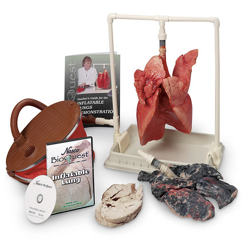 BioQuest® Inflatable Lung Comparison Kit & Intructional DVD
