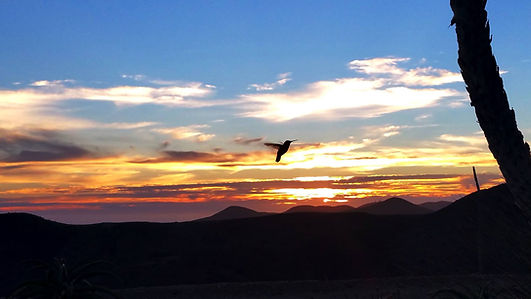 Hummingbird Sunset