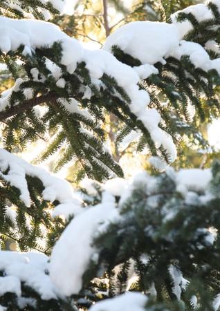 Lumière chaude au travers des branches