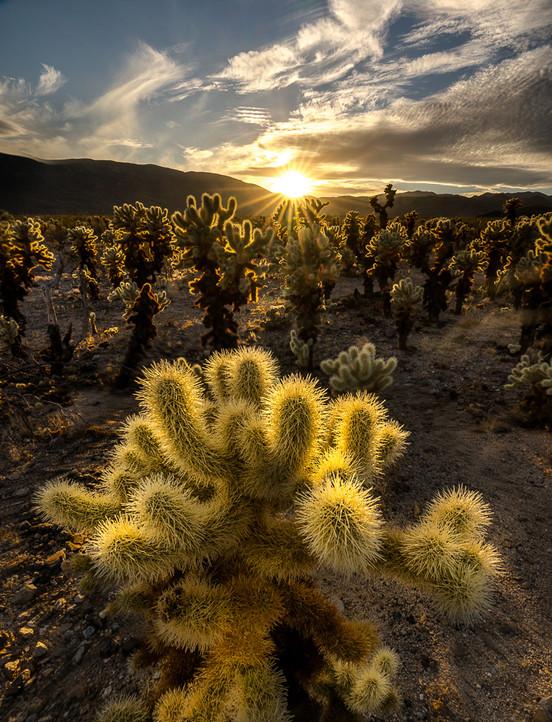 Stack cactus Cholla-2.jpg