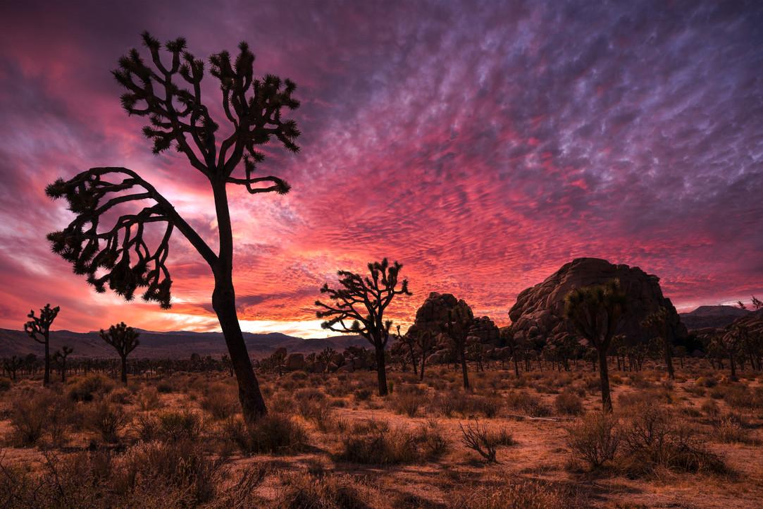 Joshua sunset-2.jpg