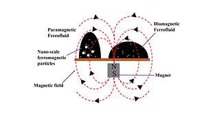 Magnetic field _FF.jpg