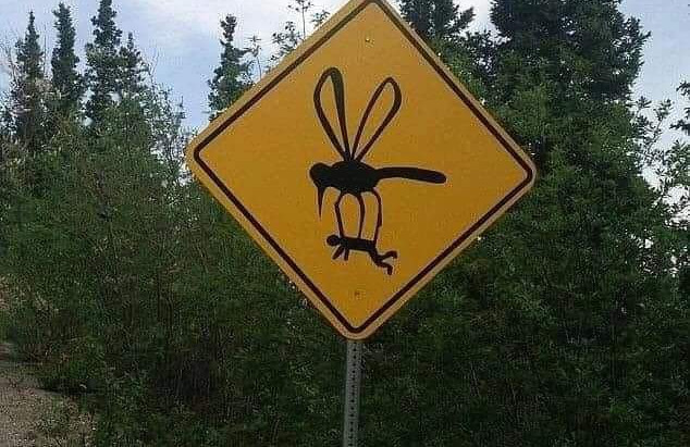 Giant Mosquitoes Out To Bite Us All