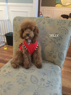 1-telly