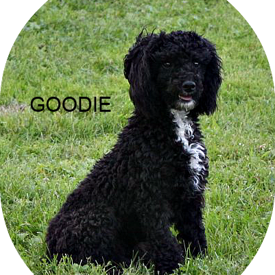 goodie_edited