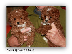 cherry et samba
