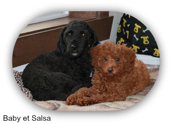 salsa 014-1