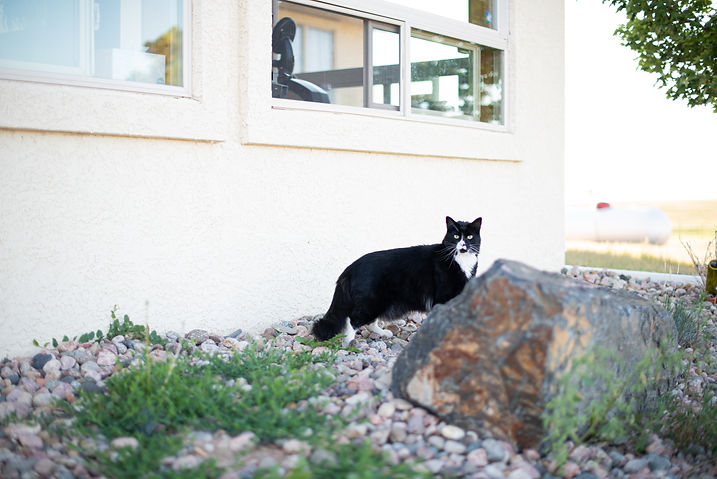 black and white cat in front of a house