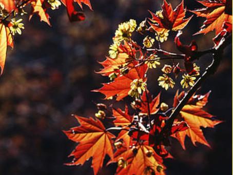 女子旅や家族旅行のアクティビティ〜 伊豆半島の秋の見頃絶景~紅葉以外もある「海すすき」(伊豆半島のおすすめのアクティビティ・旅行プラン編)