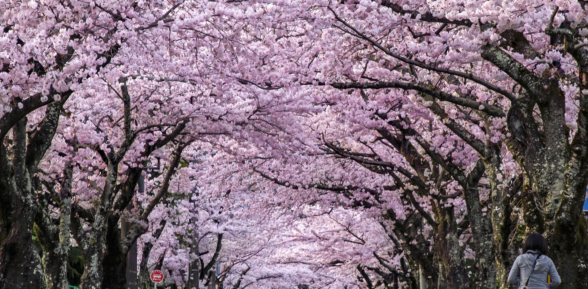 ネオ・リゾートホーム遊方YUKATA 伊豆高原桜のトンネル