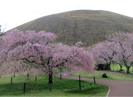 伊豆&伊東 春の花が咲く名所スポット巡りの旅行プラン