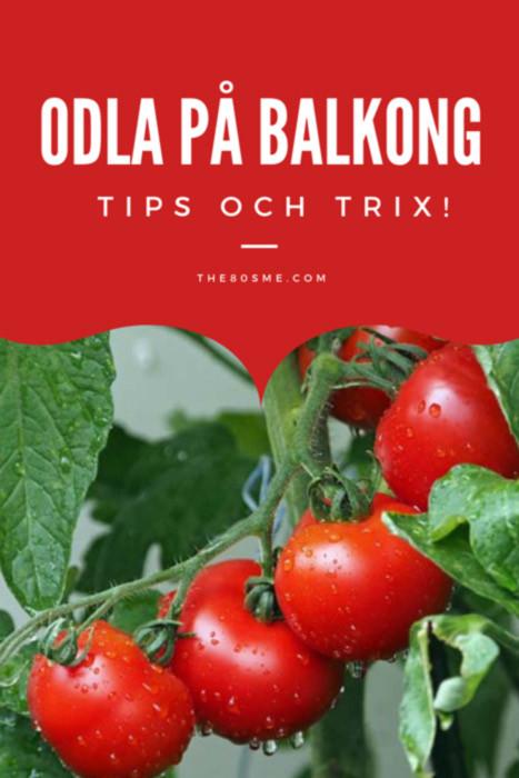 Odla på balkong - tips och trix