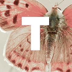 T-tile.jpg