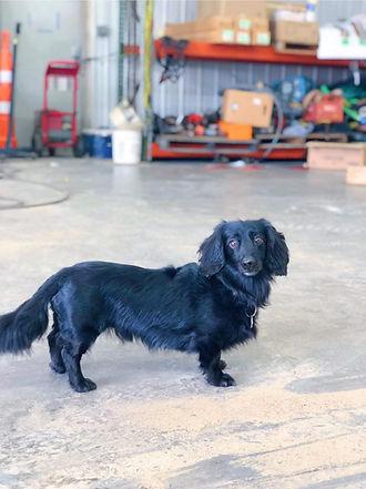 Shop Dog walter Joe.jpg