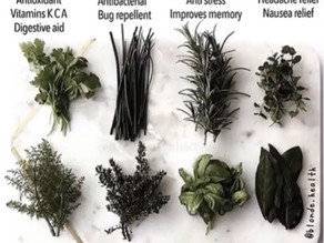 The Gift of Herbal Medicine from Mother Earth!