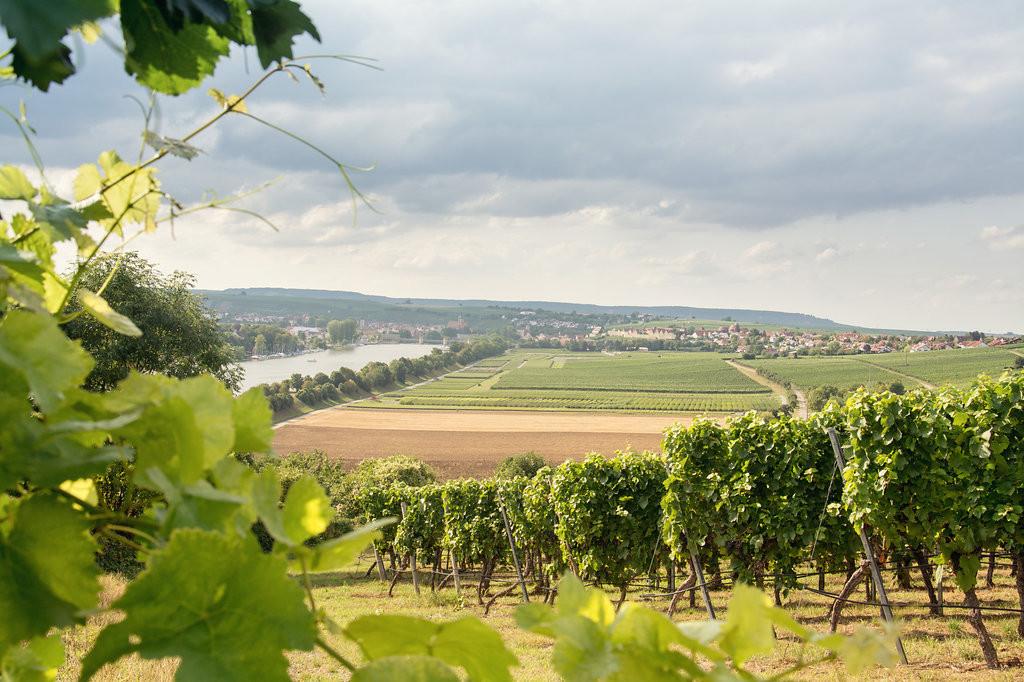 Weingut Hirschmüller - in den Weinbergen