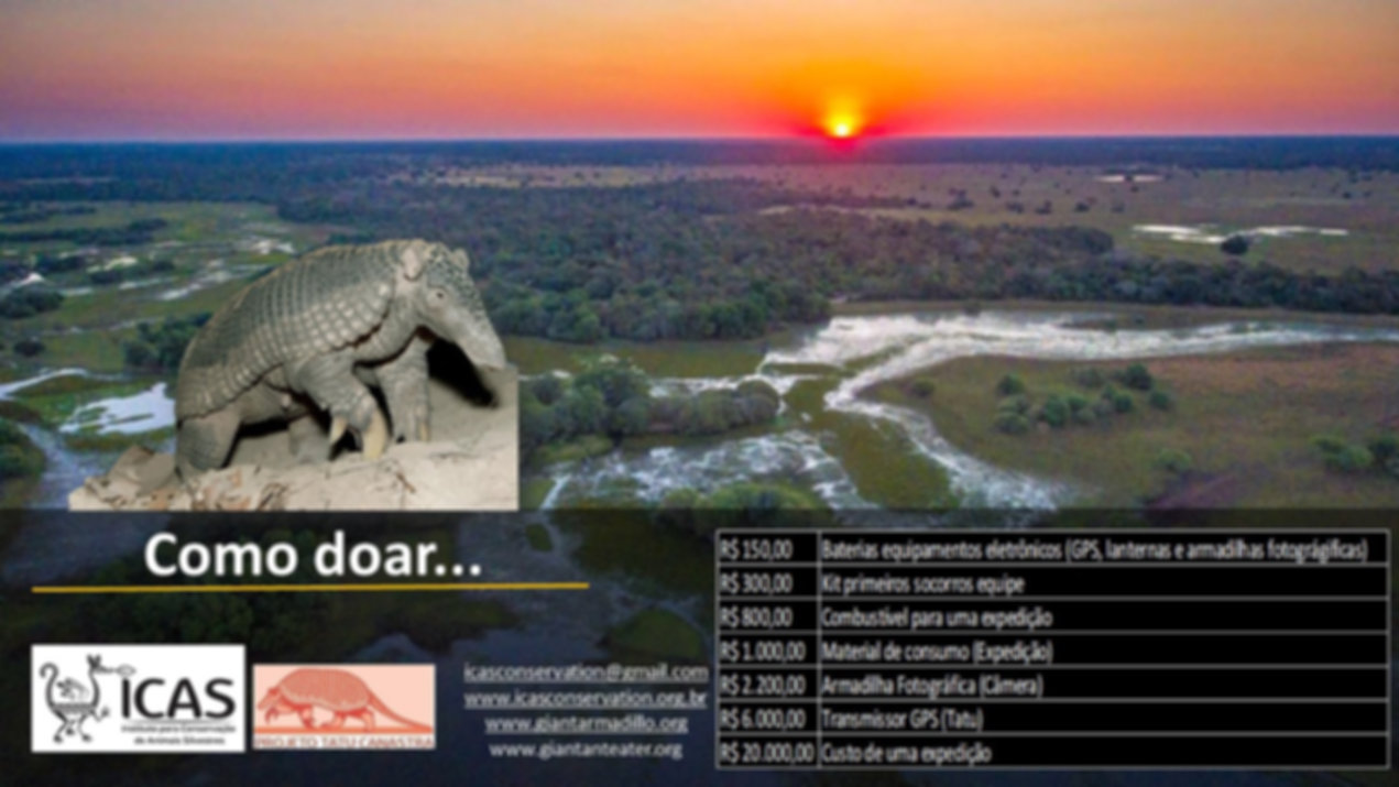 Turism-and-Conservation-Giant-Armadillo-