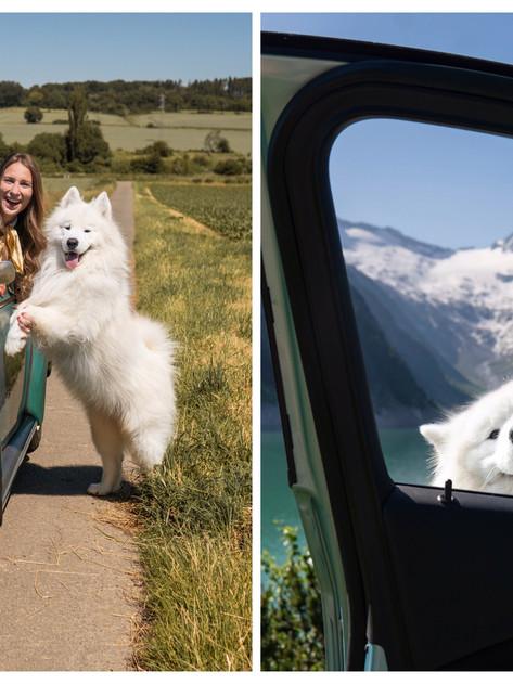 🐶Traveling with a dog   Reisen mit Hund
