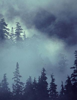 Forest%20Scene_edited.jpg