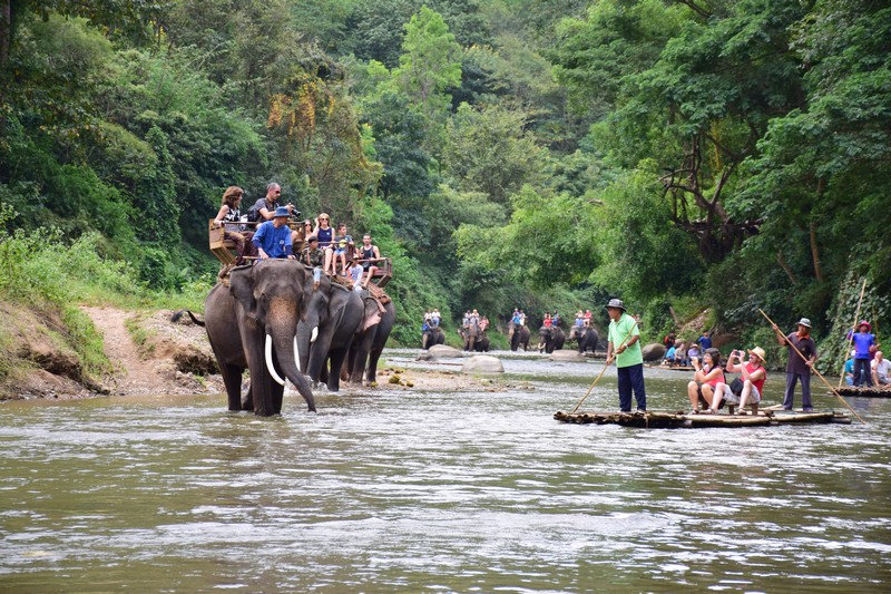 Excursion  Elephant Camp