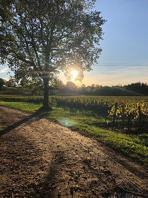 Vignes de la vallée de Montagne Saint-Emilion au mois d'Octobre.
