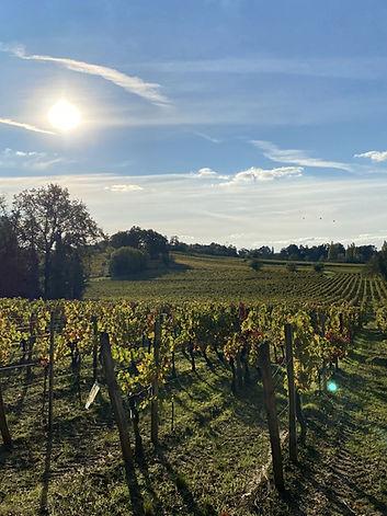 Vignes de la vallée de Montagne Saint-Emilion.