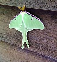 green moth.jpg
