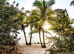 coconut-trees-2225499.jpg