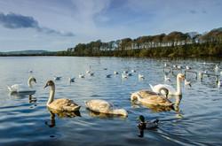 Lake Ballyalla Ennis