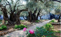 Garden of Gethsemeny