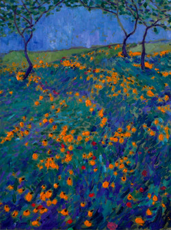 Hill Country Wildflowers