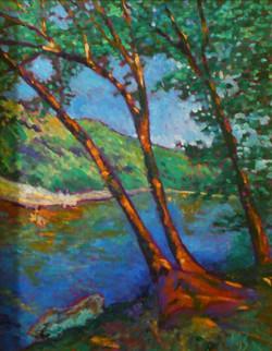 Trees on Barton Creek