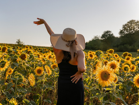 Operation 'Sunny-side up' hopes to draw tourists with sunflower blooms