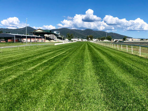 The 'all clear' for Tamworth Jockey Club after morning inspection by Racing NSW