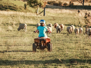 Could Drones Replace Quad Bikes on Farms?