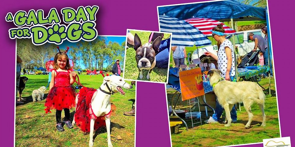 Gala Day for Dogs