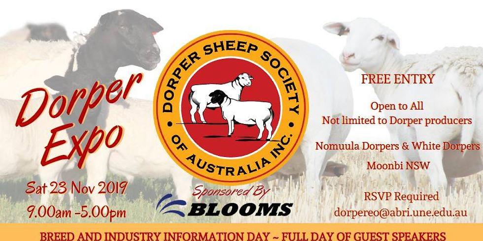 DSSA - Dorper Expo Moonbi NSW