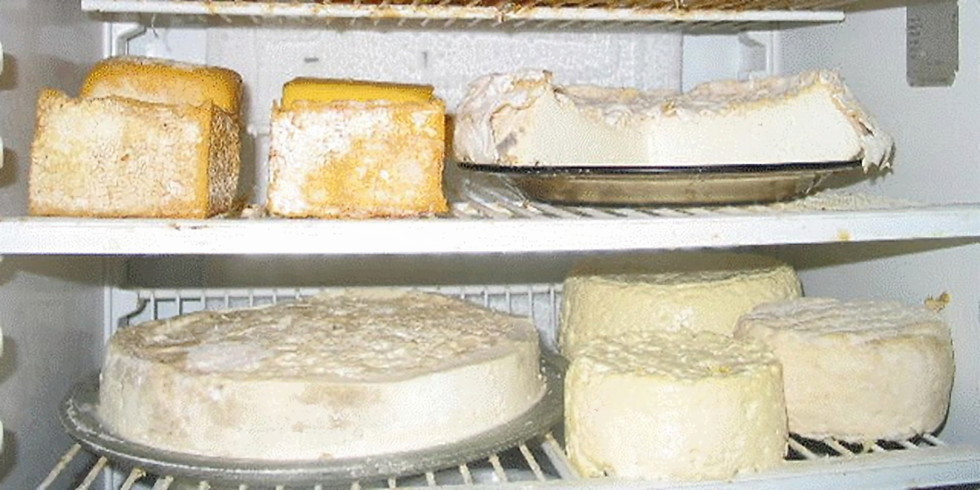 Cheese, Sourdough and Fermented Foods Workshops