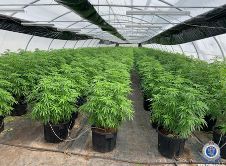 $8 million industrial cannabis factory dismantled