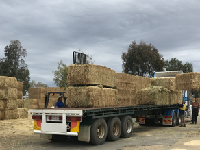 Hay Mate, Have a Bale