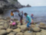 式根島神引湾、磯遊び風景、色々な種類の生き物にたくさん出会えます
