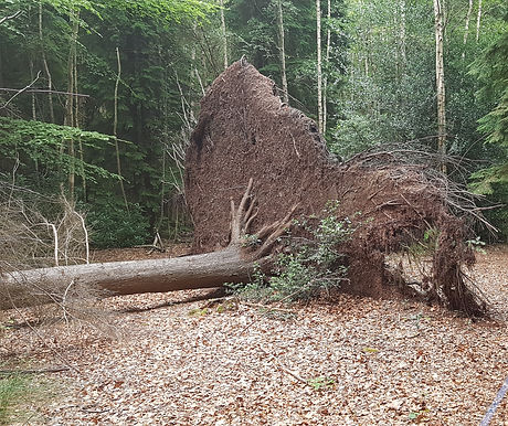 Uprooted.jpg