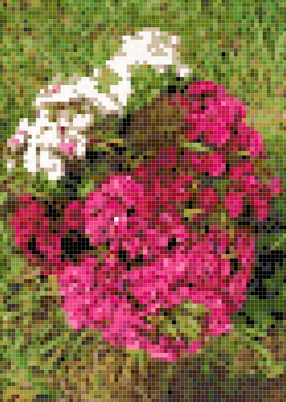 Flower 5 Preview.JPG
