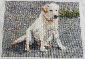Cross stitch Apr 2020.JPG