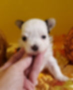 Availalbe girl 4 weeks.jpg