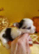 Available girl 4 weeks 2.jpg