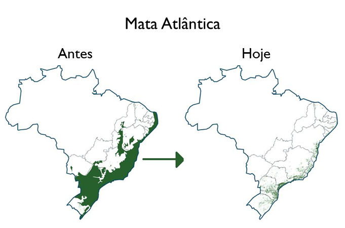 mata-atlantica-br.jpg