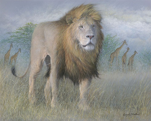Approaching_Reign_Lion