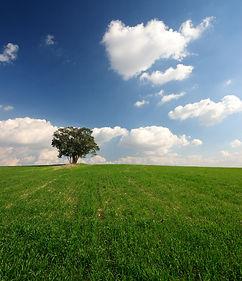 Landschaft Wiese Baum Himmel