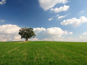 Leaving for greener grass